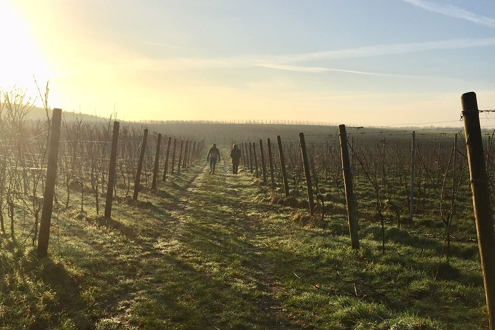 Groesbeek Wijndorp, de wijngaarden van Colonjes